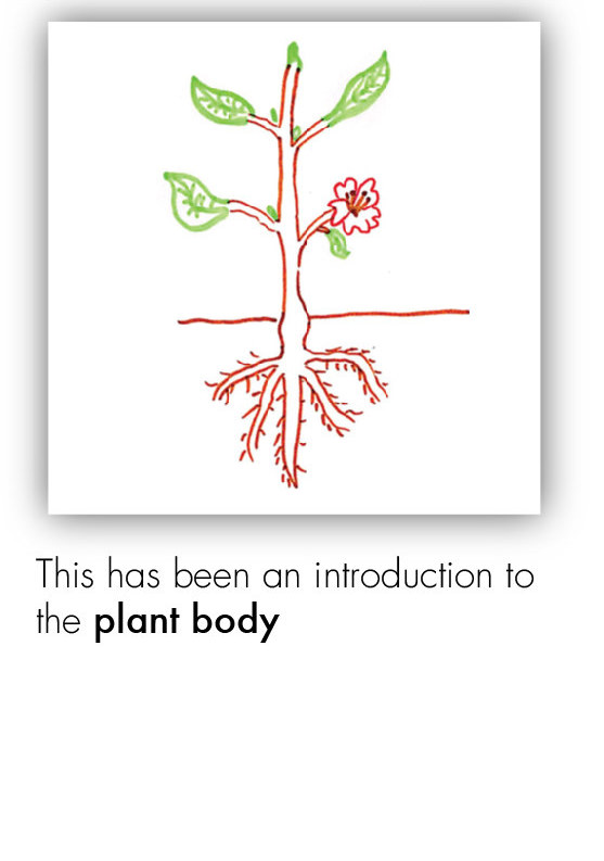 BOT_Intro to the Plant 28